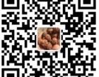 尼泊尔大金刚菩提批发市场一手货源满肉矮桩双龙蜂窝爆肉