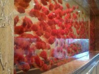 无锡市鱼缸清洗维护