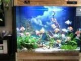 深圳专业水族鱼缸制作别墅家庭鱼缸、公司前台鱼缸定制