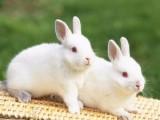 哪里有卖兔子的