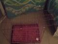 笼子,狗,兔都可使用,带脚垫