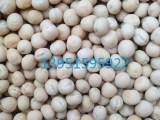 冷季型青饲料冬牧70黑麦草种子澳洲燕麦种子价格实惠快寄全国
