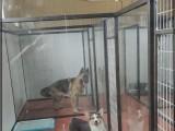 烟台训犬 宠物训练 宠物寄养 馨怡宠物训练学校