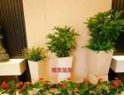 南京办公室绿植租摆 绿化养护 节日会场绿植花卉出租