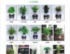 植物租摆,植物租售,绿化工程,植物养护
