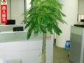 长沙专业花卉租摆批零各种草花苗木,各种绿植价格优惠
