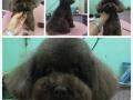 铁岭温馨宠物美容师培训学校15年宠物美容老师授课