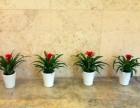 自贡绿植租摆 专业植物租赁