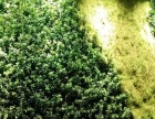 黄浦 蓬莱公园 仿真花、绿植墙、屋顶绿化、庭院绿化