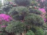 绿植花卉租赁,园林别墅花园设计,施工,厂区绿化