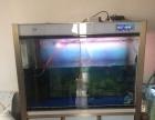 罗汉魚金花母魚产过卵森森底滤1米标准缸1个