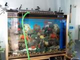 广州/佛山市鱼缸上门一次性清洗/包月护理维护服务