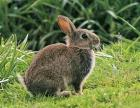 贵州华农金能野兔养殖-农民快速奔小康!
