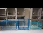 广西贵港市出售各色龙猫