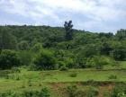 阳江市2000亩杂树林地