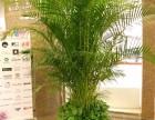 植物租摆 植物租赁 植物养护 园林绿化 绿化维护