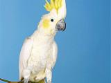 台州温岭本地出售观赏鸟健康保障