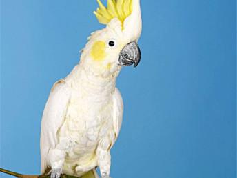 畢節本地出售觀賞鳥健康保障