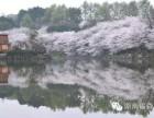 萍乡至醴陵瓷博园+长沙植物园.樱花节赏郁金香一日游