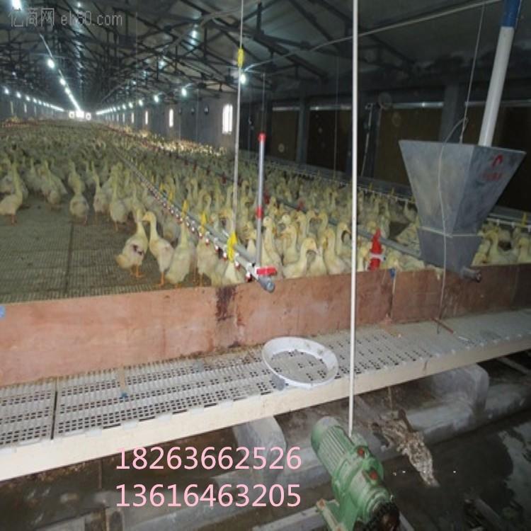 优质鹅用塑料粪板 新型养殖用塑料地板 塑料粪板生产厂家