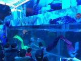 洋清水族专业美人鱼大型鱼缸表演巡演出租 美人鱼表演方案策划