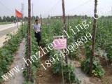 2*60米有结塑料编织网湖南郴州|永州|怀化|湘西|娄底园艺攀爬