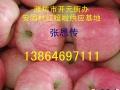 潍坊红富士苹果供应基地