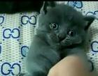 蓝猫弟弟妹妹找新家