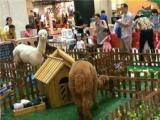 羊驼出租,萌宠动物租赁,鹦鹉表演百鸟展海洋鱼缸展览