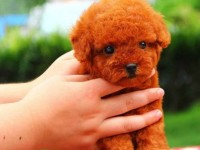广州哪里有宠物领养机构广州宠物免费领养广州狗狗免费领养 浏览
