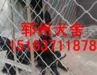 舟山黑狼犬图片哪里有卖黑狼犬的