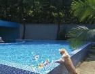宠物寄养 洗澡美容 宠物游泳