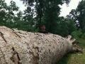 500岁金丝楠木棺材,懂行的来买