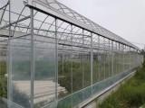 玻璃温室大棚设计 金坤玻璃温室大棚造价 金坤温室