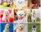 本地犬舍基地一直销各种幼犬一品种齐全一签订保障协议
