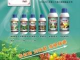桃树苹果葡萄石榴梨树枝杆腐病涂抹特效药桃杏流胶病好农药