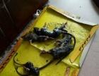 第一次免费灭鼠灭四害
