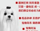 马尔济斯犬在这里、优惠纯种和健康、CKU认证犬业 纯种可