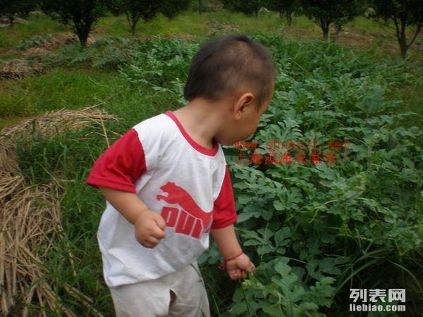 上海浦东南汇农家乐 回归自然 采摘蔬果 放飞心情