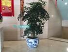 天津绿植租赁会场办公写字楼天津租摆网租花租绿植