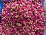 玫瑰花提取物 玫瑰花單方顆粒 玫瑰花濃縮顆粒