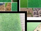 承德草坪承德高档草坪销售承德耐寒草坪承德草坪绿化