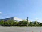 板仓大面积新厂房出租 水电通 交通方便 可长期经营