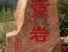 黄岩采摘园大李子熟了