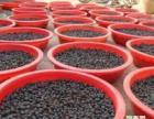 顺应市场需求大力发展特种养殖业养殖宏源地鳖虫