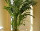 南通花卉租赁 南通花木租摆 别墅绿化草花种植,仿真花卉绿化墙