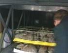 兔子多少钱一只种兔哪里有卖的