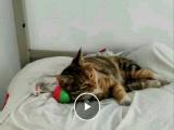 寻猫启事必有重谢