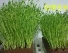 无土栽培育苗生长器
