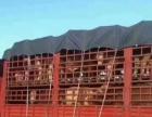 西门塔尔夏洛莱利木赞肉牛牛犊出售